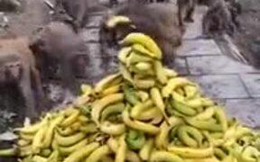 Monkeys Are Better Organized Than Humans