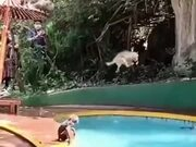Vacation For Monkeys