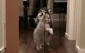 Big Doggo Teaches Little Doggo How To Jump