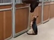 Dog Gets Curious About Horse And Touches It
