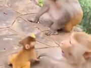 Baby Monkey Gets Shoved By Adult Monkey