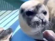Seal Eats A Fish And Smiles Back At The Camera