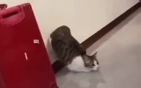 Cat Does A Cool Launch