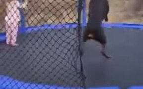Wholesome Doggo And Kid Jump On A Trampoline