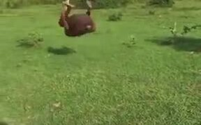 Man Took Backflipping Lessons From A Frog