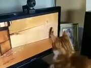 Cat Wonders Where The Mouse Went