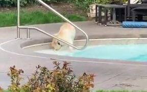Puppy's First Time Playing Around In The Pool