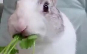 Bunny Eats A Stalk Of Parsley In Under A Minute