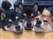 Three Dogs Do The Mlem!