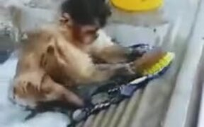 Even Monkeys Do Their Own Cleaning, Why Can't You