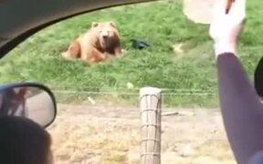 Bear Grabs Flying Toast Like A Boss