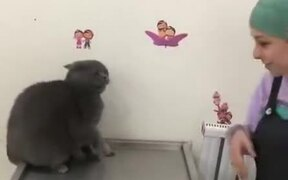 Cat Does Fast Set Of Melee Attacks