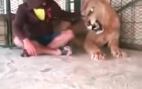 Man Sits With Angry Lion