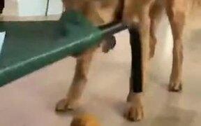 Doggo Tries To Take The Toy, Fails Badly