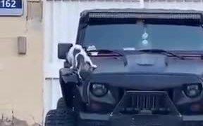Cat Keeps Triggering Car Alarm