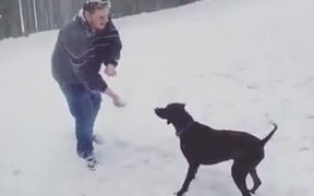 Not The Most Athletic Doggo Out There