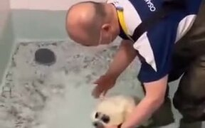 Baby Seal Experiences Swimming For The First Time