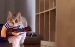 Literally A Cat Doing A Catwalk
