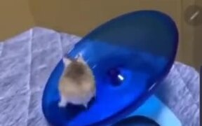 Hamsters Are The Funniest Of All Pets