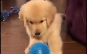 Puppy Gets Distressed About Prickly Ball