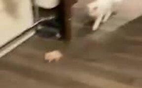 Hamster Stays Still To Avoid Cat, Doesn't Work