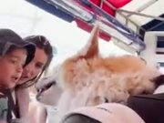 Corgi In A Backpack Gets All The Attention