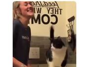 Cat Gets Massaged On The Right Spot And Gets Nuts