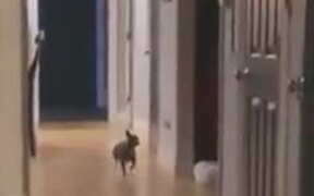 Dog Dances To The Red River Jig Song