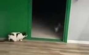 Cat Scares The Heck Out Of Little Chihuahua