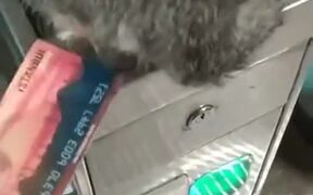 Cat Won't Let Man Pass Through Subway Gate