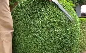 Gardener Trims Bush Into A Perfect Sphere