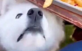Small Doggo Wants Some Fries But Can't Reach It