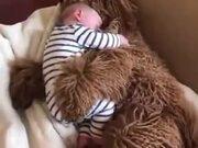 Cuddly Dog Is A Real-Life Teddy Bear