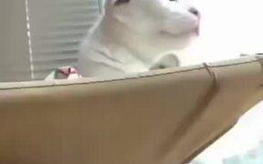 Stupid Cat Falls Off It's Hammock