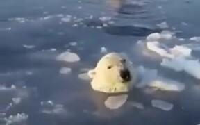 Mother Polar Bear Breaks Ice
