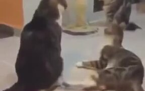 Startling Cats Is Beyond Funny