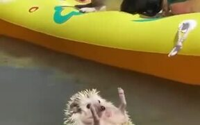 Hedgehog Enjoys The Summer Life
