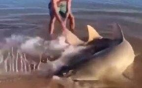 Guy Saves A Beached Sawfish