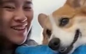 Dog's Adorable Reactions To Getting Kissed