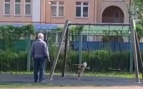 Cat Wants To Have A Go On The Swing Like A Child