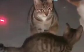 Cat Totally Regrets Becoming A Mother