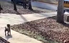 Happy Puppy Runs To Receive Child From The School