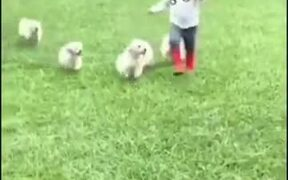 Little Boy Gets Attacked By Hoards Of Puppies