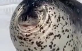 The Seal That Had No Neck