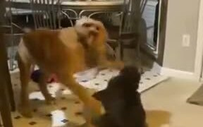 Puppy Wants To Play, Cat Makes It Pay
