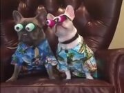 Doggos With Googly Eyes Ready To Hit The Vacation