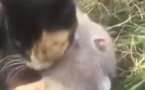 Beautiful Friendship Between A Rat And A Cat