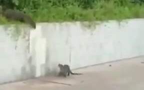 Otters Never Leave Their Family Alone