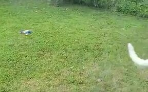 Penelope The Dog Loves Playing With The Hose