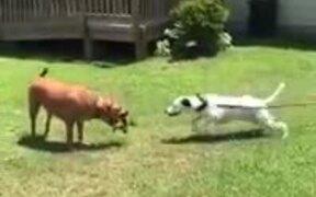 Doggo Trolls It's Doggo Friend